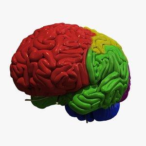 3d human brain regions