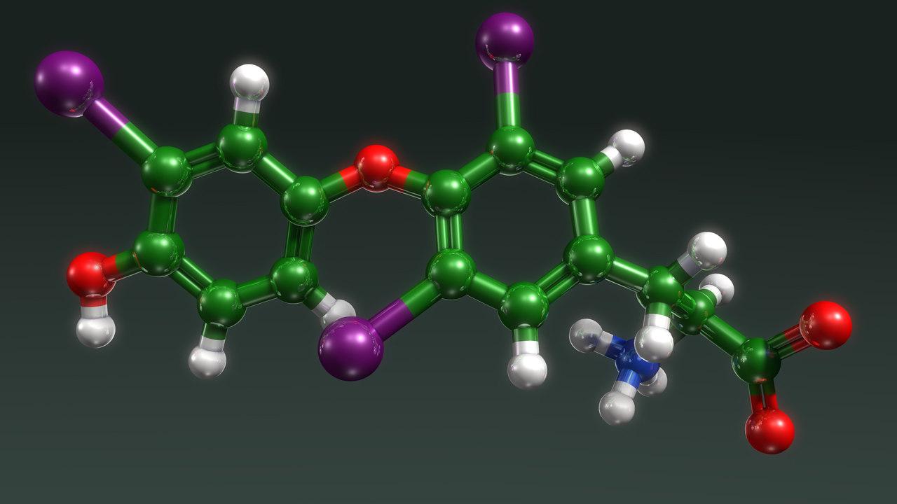 thyroid hormone physiological 3d obj
