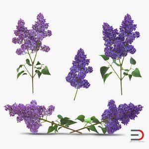 syringa lilac 3d 3ds