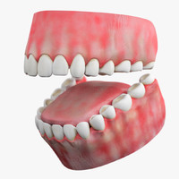 3d model teeth gum