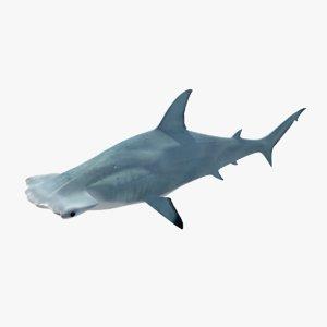 3d model hammer head shark