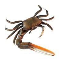 realistic crab 3d max