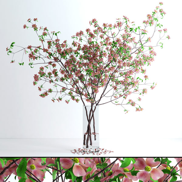 max realistic pink dogwood blossom