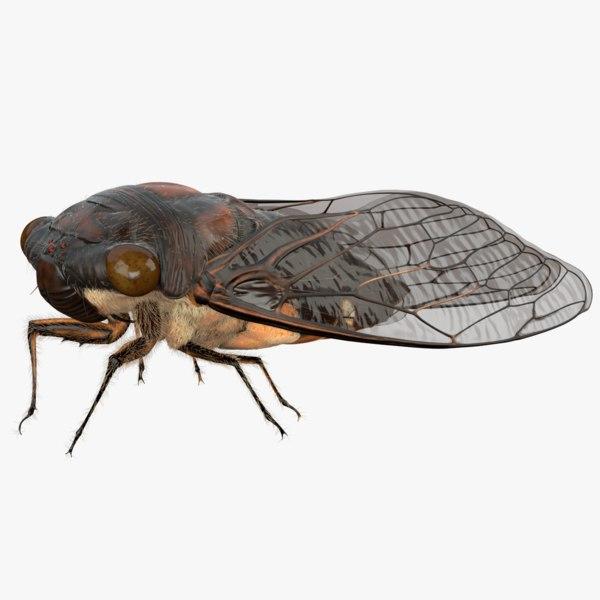 rigged cicada 3d model