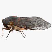 Cicada (Maya)