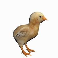 3d chick baby chicken model