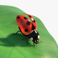 Ladybug Rigged Animated