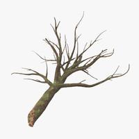 fallen logs oak 02 c4d