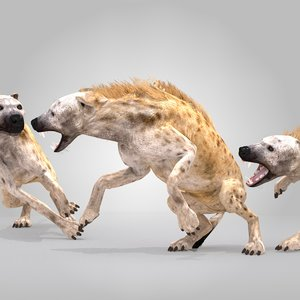 spotted hyena rig animation 3d max