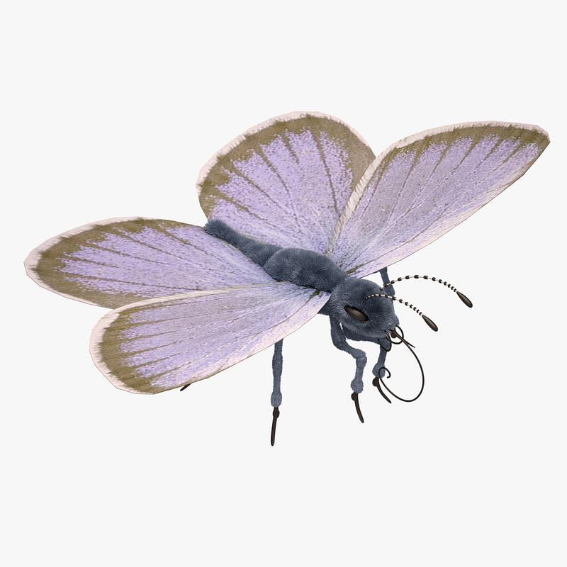 3d blue butterfly close model