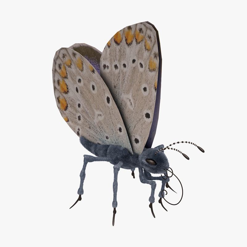 3d max blue butterfly open
