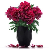 paeonia flower peony max