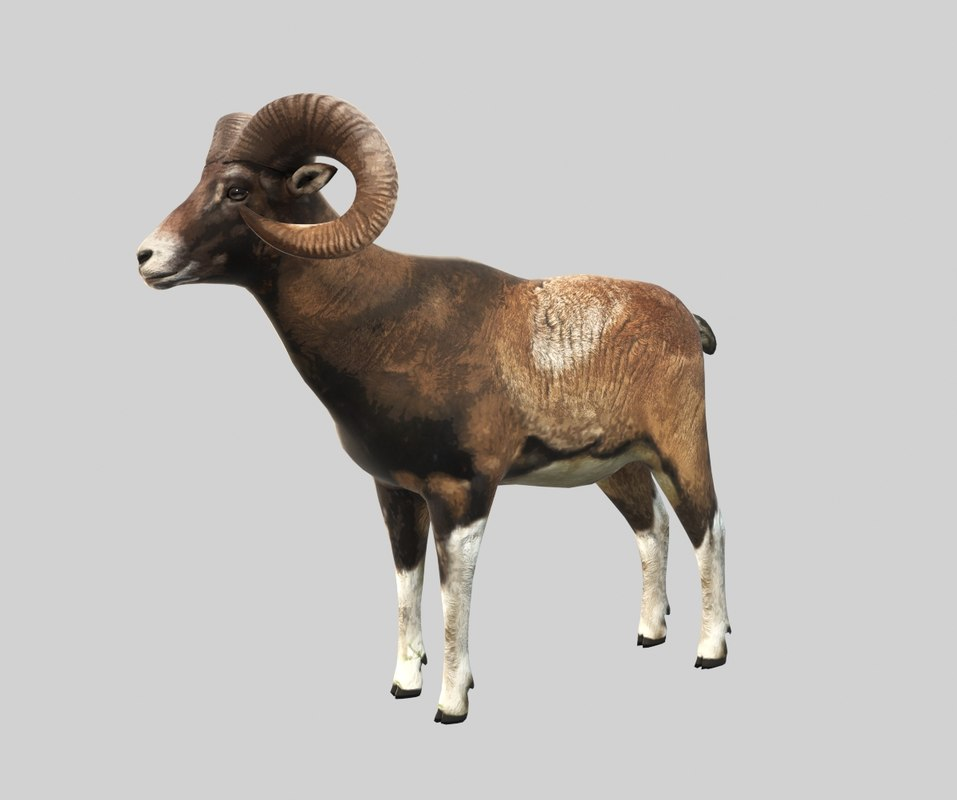 mouflon rig 3d model