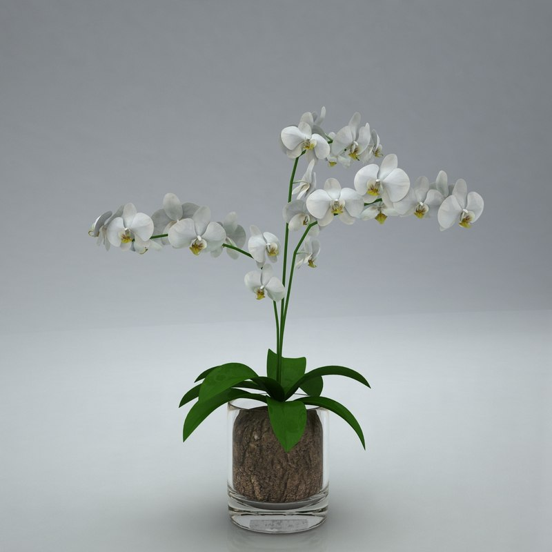 3d model orchid moth white