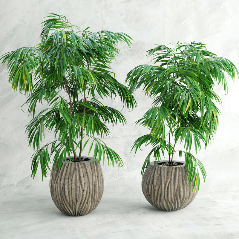 max palm