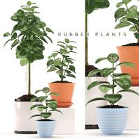 fbx rubber plants