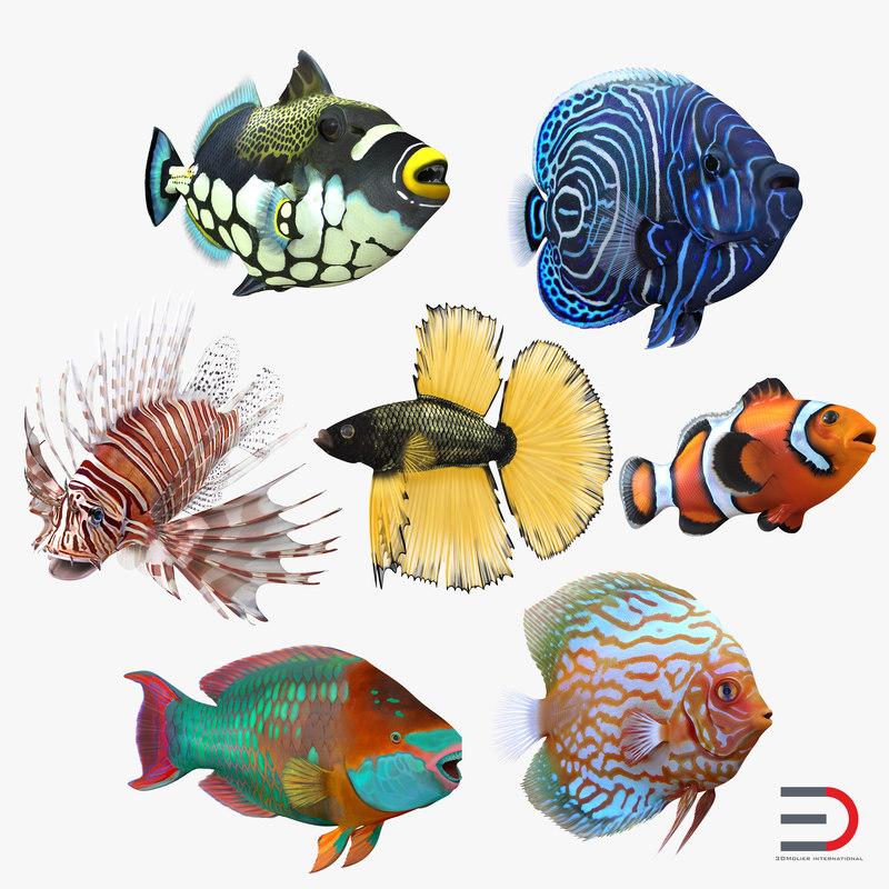 max coral fishs