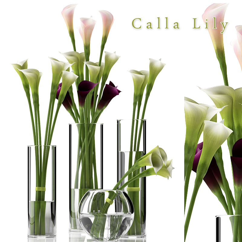 white calla 3d model