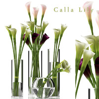 FLOWER CALLA LILLY 2