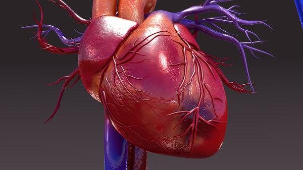 3d model of infected circulatory