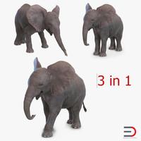 3d model baby elephants