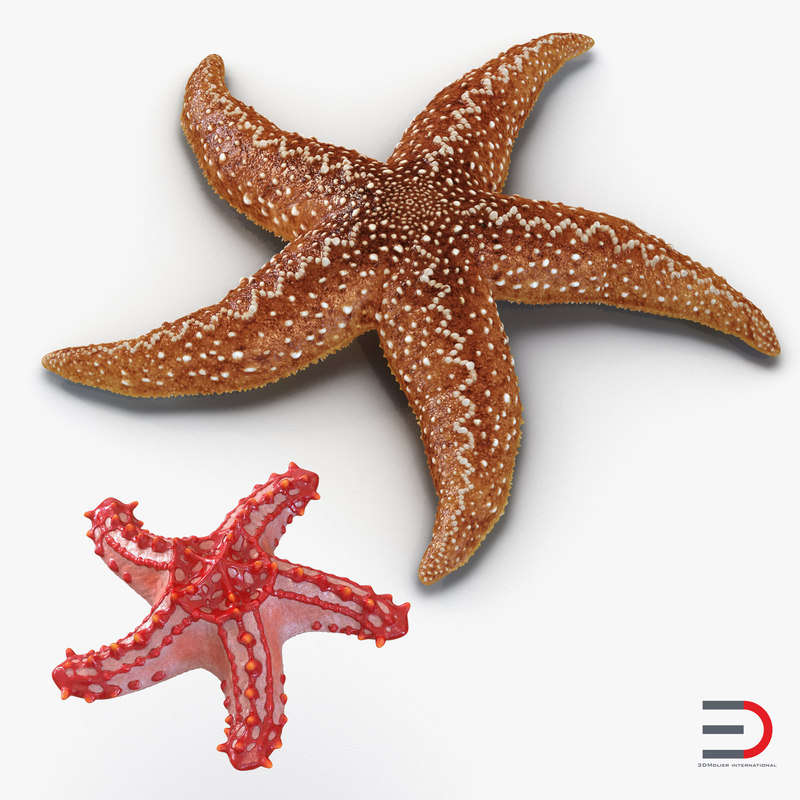 3d model rigged starfishes