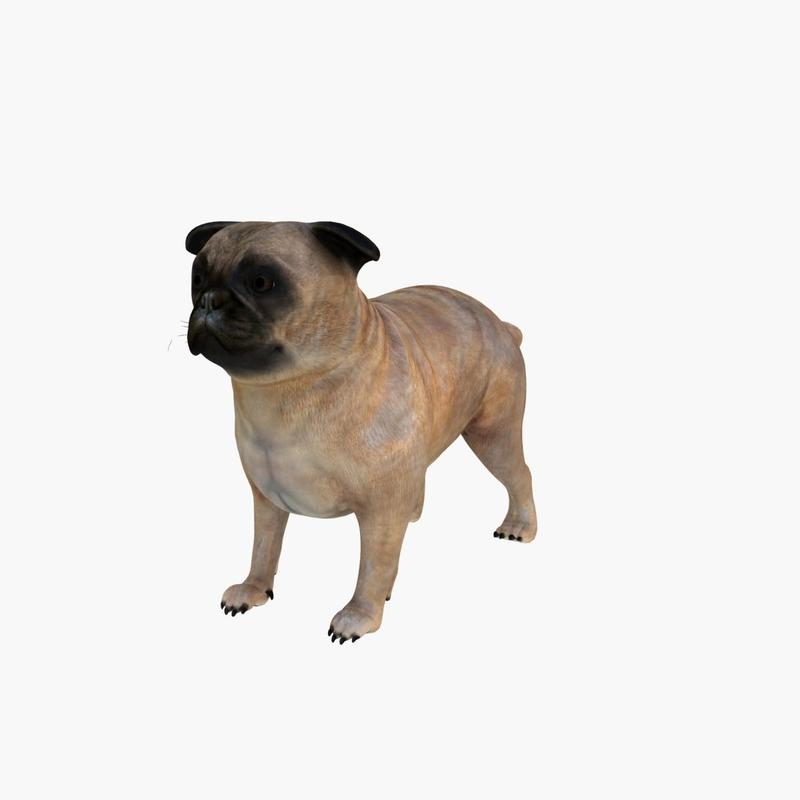 3d pug dog
