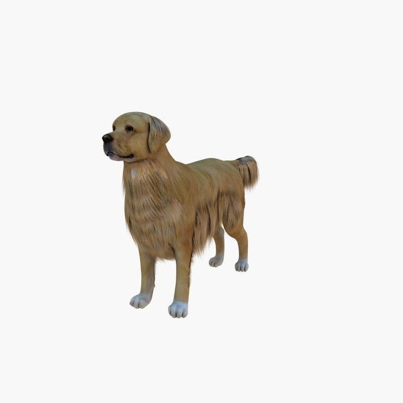 3d model of retriever