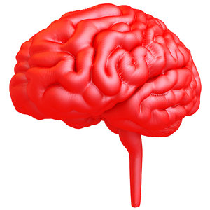 printable human brain printing 3d obj
