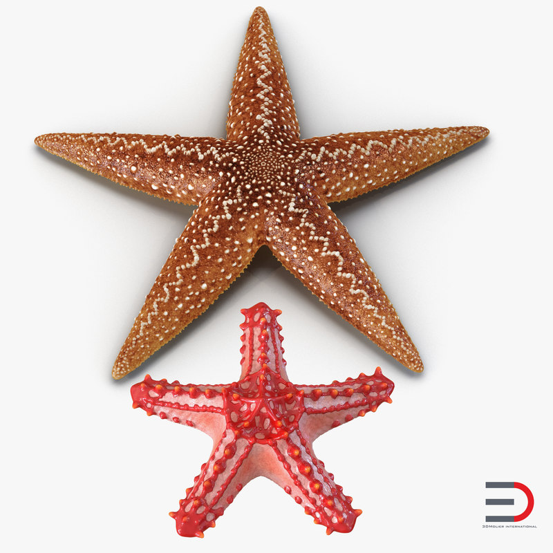 3d model of starfishes set red