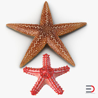 starfishes set red 3d 3ds