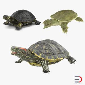 turtles 3 modeled pond 3d model