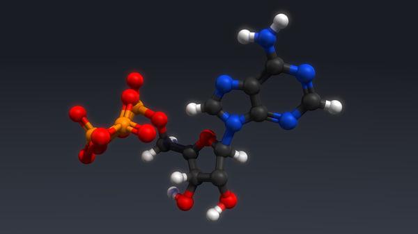 3d atp structure model