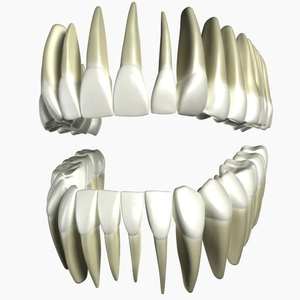 human teeth modeled 3d max