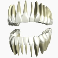 human teeth modeled 3d max