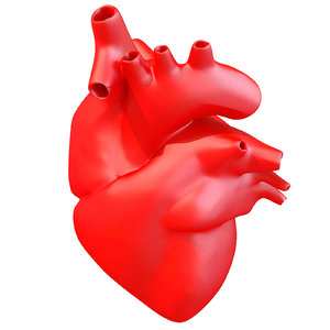 3d model print-ready human heart printing