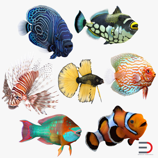 3d coral fishes rigged clownfish model