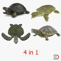 3d turtles 2 modeled