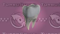 3d teeth model