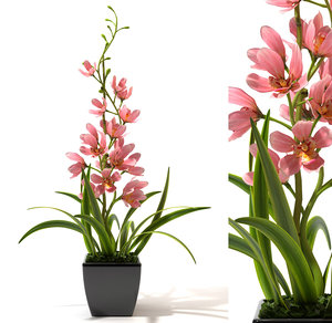 orchid flower plant pot 3d model
