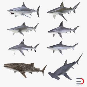 3d sharks 10