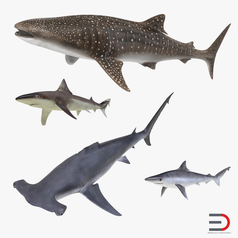 max sharks 8