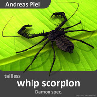 3d fbx realistic tailless whip scorpion