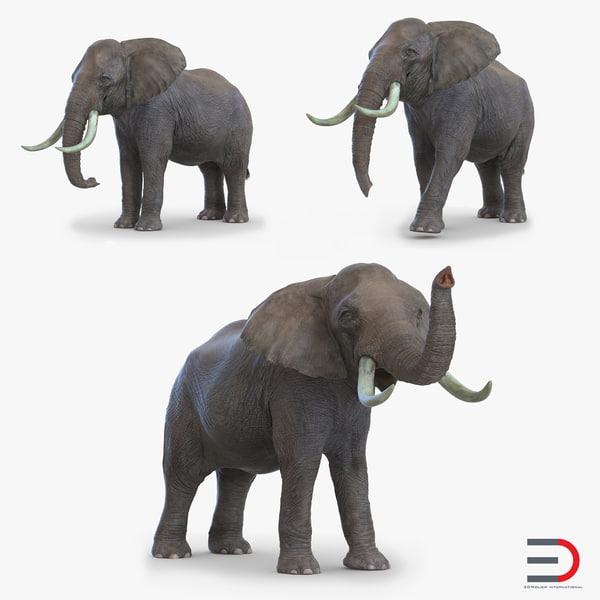 elephants set 3d model
