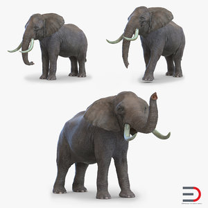 elephants set 3d model