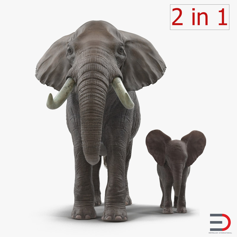3d elephants rigged model