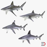 sharks 7 3d max