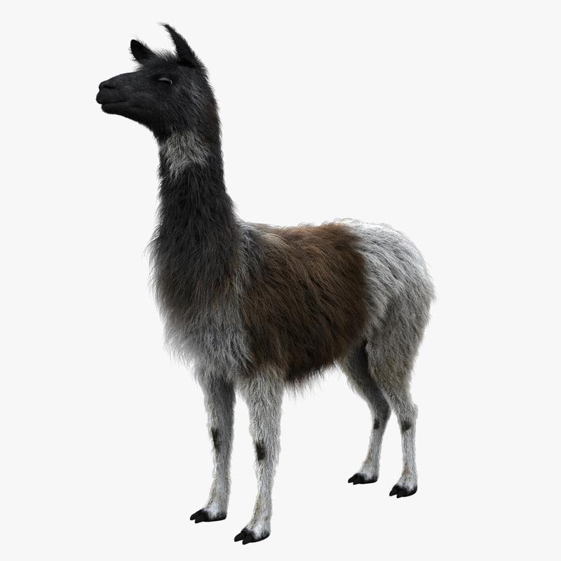 3d model llama fur