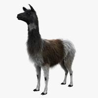 Llama (FUR)