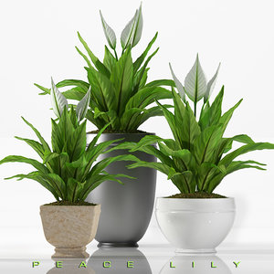3d model lilly plants